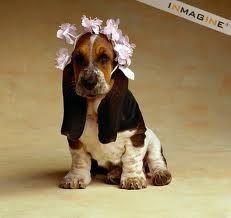 Basset Hound puppy with flowers Basset Puppies, Hound Puppies, Basset Hound Puppy, Hound Dog, Dogs And Puppies, Doggies, Beagles, Bassett Hound, Drag