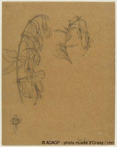 Lalique - Deux Etudes de Fleurs et Feuilles de Fuschia et Une Etude de Fleur de Fuschia