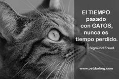 frases sobre gatos sigmund freud
