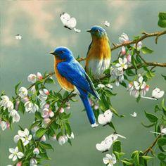 Birds GIF - Birds - Discover & Share GIFs