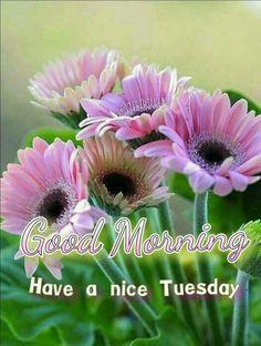 Gerbera s Rose All Flowers, Flowers Nature, Amazing Flowers, Beautiful Flowers, Plantation, Belleza Natural, Beautiful Gardens, Good Morning, Tuesday Morning