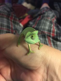 Baby Chameleon, Veiled Chameleon, Cute Reptiles, Reptiles And Amphibians, Cute Creatures, Beautiful Creatures, Cute Baby Animals, Animals And Pets, Little Babies