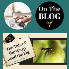 There is such a thing as a fig wasp and these particular wasps have a most unusual life cycle centred around the delicious fig. With such a symbiotic relationship are figs even vegan? Nature Words, What A Beautiful World, Wasp, Natural Life, Life Purpose, Life Cycles, Figs, Told You So, Relationship