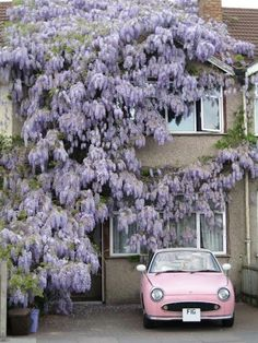 Whoever pinned this before was commenting on the Wisteria Wall, I am commenting on the cute little pink car!