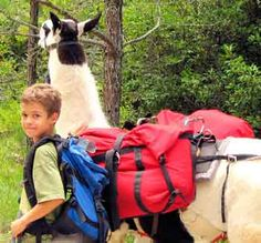 """Take a Road Trip with a twist.  Llama Trek, Learning Vacation, """"Roots"""" Trip, Voulonteer Trip, Eco Vacation, Covered Wagon Trip, Clipper Ship Cruise, Farm Stay or Dude Ranch"""