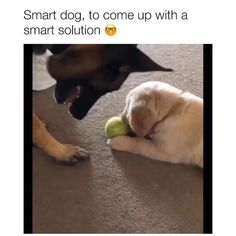 Cute Funny Dogs, Funny Dog Memes, Cute Funny Animals, Cute Animal Memes, Cute Animal Videos, Funny Animal Pictures, Chien Golden Retriever, Gato Gif, Love Dogs