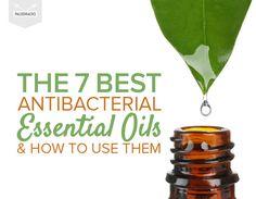 The 7 Best Antibacterial Essential Oils & How to Use Them