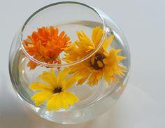 Trucs écolo d'été tout simple!! Comme comment garder les fleurs coupées plus longtemps: J'adore!     http://www.alohayoga.ca/aloha/i.php?p=home=f=3_6_0_10