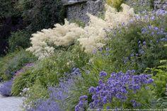 Aruncus Dioicus, Goat's Beard, Goatsbeard, Aruncus Sylvestris, Spirea Aruncus, White Flowers, Shade Plant, Plants for Shade, Plants for wet soils