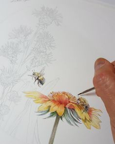 More #bumblebees for @pollinatorpartnership  #pollinators #flowers #bees