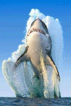 Puissance de requin blanc