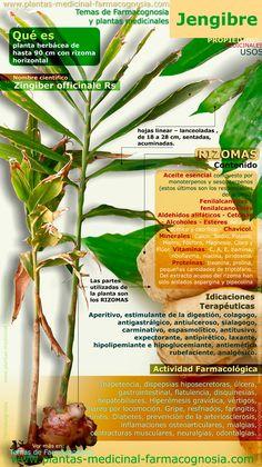 Infografía. Resumen de las características generales de la planta de Jengibre. Propiedades, beneficios y usos medicinales más comunes del Jengibre.