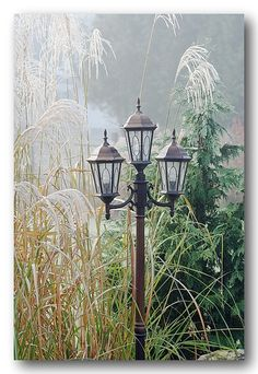 Lamp post in the morning fog by Stephen Just