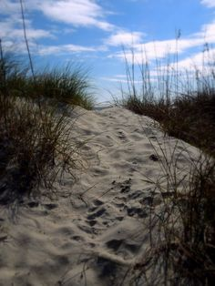 Ocean Isle Beach N.C. Photography by Wendy M. Holden