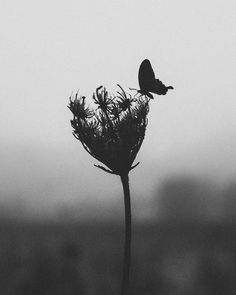 The Superb Atmospheric And Poetic Black & White Photo Artworks Of Gabriel Guerrero Caroca Black And White Photo Wall, Photo Black, Black White Photos, Photography Poses Women, Floral Photography, Nature Photography, Landscape Photography, Black Women Art, Monochrom