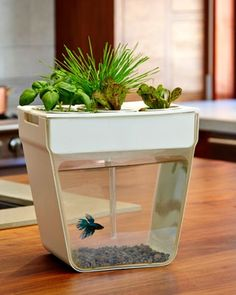 Aquafarm-Self-cleaning fish tank that grows food. Fish waste feeds the plants, plants clean the water. Includes everything you need to get started as well as organic seeds and a discount coupon for a Betta fish.