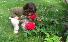 Flower peonia Self
