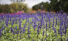 9 flower season makes travelers are enchanted in Dalat  #Dalat #Dalattours #flowerinDalat