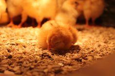 HOVEDSIDEN . - www.brubakkenoppdrett.com