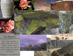 the mood board for my new web site, a portfolio site, creating in Skillcrush