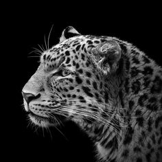 Stunning Monochromatic Portraits of Animals by Lukas Holas - My Modern Met