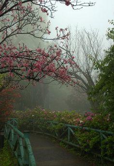 Cherry Blossoms....nostalgic
