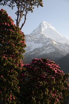 Trekking around Annapurna Nepal