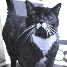Mustache cat!