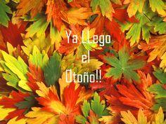 las mejores imagenes con frases para otoño