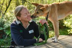 There's nothing quite like a kiss from a Dingo. Keeper Sue out at Healesville shares the love with sweetheart Maliki who celebrated her first birthday last Friday!