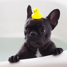 bathing with duck friend....not thrilled!