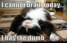 can't brain today i has the dumb - Google Search