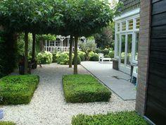 Mooie strakke tuin - Bankje onder dakplatanen