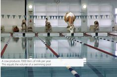 Image Ability | Week 2 Assignment.   A cow produces 7000 liters of milk per year.  This equals the volume of a swimming pool