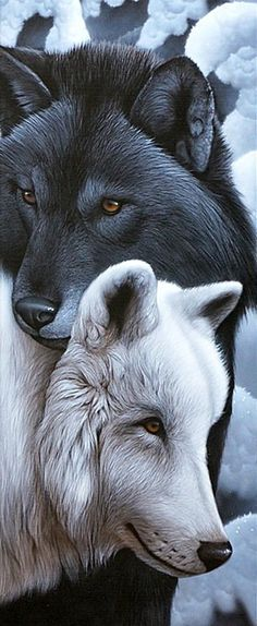 "kabrina kitty purrrssss ~ ♥ - ""The Wolf"" - Animals Wildlife Paintings, Nature Paintings, Wildlife Art, Animal Paintings, Horse Paintings, Pastel Paintings, Beautiful Wolves, Animals Beautiful, Cute Animals"