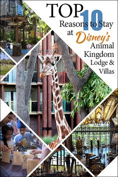 Considering the Animal Kingdom Lodge & Villas?  Here are some great things to consider!