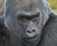 Columbus Zoo - one of the best Zoo's in the country!