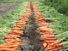 Healthy Horticulture: How To Create Your Own Organic Garden Herb Garden, Vegetable Garden, Garden Tools, Home And Garden, Organic Gardening, Gardening Tips, Gardening Zones, Gladiolus, Dream Garden