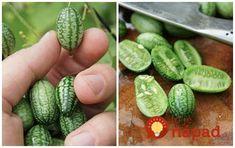 Tento malý zázrak z prírody, môžete mať tento rok aj vo vašej záhrade. Pestovanie nemôže byť jednoduchšie! :-)
