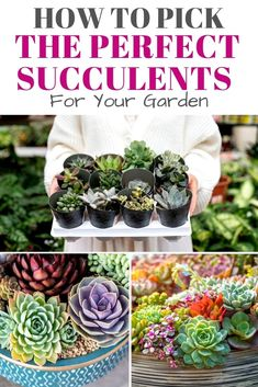 There are other things to look out for and keep in mind when choosing a succulent and learning how to keep it healthy and lasting, including the pot and the best environment for it to thrive. Read on to learn more about picking the perfect succulent and how you can continue to enjoy them for as long as possible. #perfectsoilforsucculents #perfectsucculentpot #howtopicksucculents Vegetable Garden Planning, Vegetable Garden For Beginners, Gardening For Beginners, Vegetable Gardening, Gardening Tips, Succulent Arrangements, Succulent Pots, Cacti And Succulents, House Plant Care