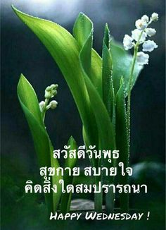 Good Morning Flowers, Good Morning Greetings, Happy Wednesday, Good Day, Plant Leaves, Nice, Decking, Movies, Handsome Quotes