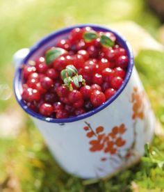 Puolukka on suomalaista superruokaa. Hapan mutta makoisa puolukka sopii niin liharuokien lisäkkeeksi kuin marjakeittojen, puurojen, uuniruokien, leivonnaisten ja mehujen raaka-aineeksi. / Finnish superfood: lingonberry.