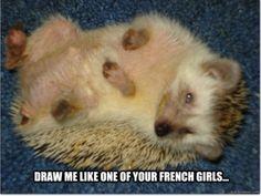 John, stop! --25 Adorable Hedgehog Memes