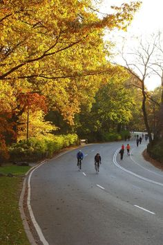 Biking around Central Park - one of the best things to do in New York City