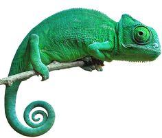 Image result for chameleon png