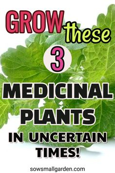 3 easy to grow medicinal plants for your organic garden. Natural Health Remedies, Natural Cures, Natural Healing, Herbal Remedies, Healing Herbs, Medicinal Plants, Growing Herbs, Growing Vegetables, Natural Medicine