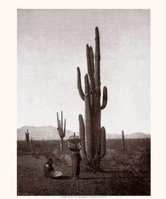 """Edward S. Curtis Litho Print: """"Harvesting Cactus Fruit - Maricopa"""" C529"""