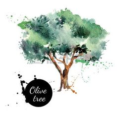 tree logo: Olive tree vector illustration. Hand drawn watercolor painting on white background Illustration