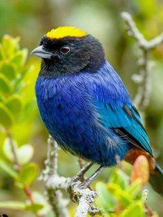 Rare Birds, Exotic Birds, Colorful Birds, Most Beautiful Birds, Pretty Birds, Animals And Pets, Cute Animals, World Birds, Mundo Animal