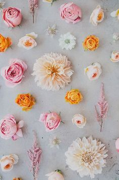 Friends, we are SO excited about a brand new column we've been working on for you, featuring one of our most favorite topics: flowers! Our seasonal flower guide: